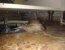 Ποντικός σε παγίδα άμεσης θανάτωσης