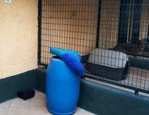 Πρόβλημα με ποντίκια, χρήση δολωματικού σταθμού