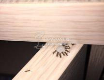 Τζελ για μυρμήγκια