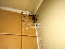 Ψιλή κατσαρίδα ή Γερμανική κατσαρίδα