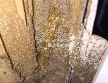 Εργάτες τερμίτη και χωμάτινοι αγωγοί κάτω από κάσα πόρτας