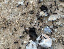 Φωλιά μυρμηγκιών στο χώμα