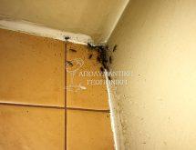 Απεντομώσεις - Ψιλή κατσαρίδα