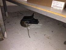 Ποντικός Rattus Rattus, παγίδα άμεσης θανάτωσης
