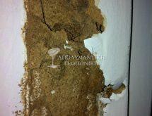 Δίκτυο χωμάτινων αγωγών υπόγειων τερμιτών σε κούφωμα πόρτας