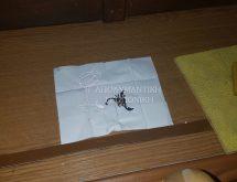 Επικίνδυνα έντομα