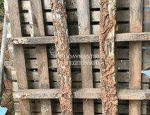 Τερμίτες - παλέτα με ζημιές υπογειων τερμιτών