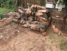 Τερμίτες σε ξύλα - παλέτα με ξύλα για καύση ή δόλωμα για τερμίτες