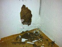 Ζημιά από τερμίτη σε ντουλάπι κουζίνας