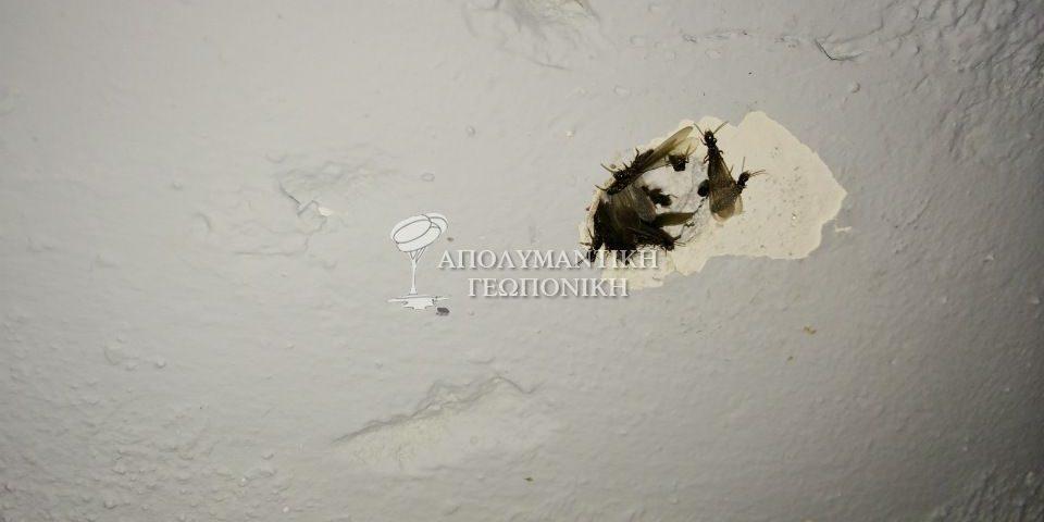 Πτερωτά έντομα τερμίτη (σμηνουργοί)