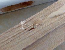 Προνύμφη ξυλοφάγου εντόμου σε ξύλινη επιφάνεια