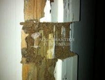 Δίκτυο χωμάτινων αγωγών τερμιτών σε κούφωμα πόρτας