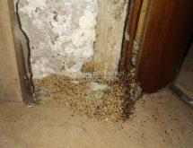 Περιττώματα τερμίτη ξηρού ξύλου