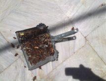 Κατσαρίδες periplaneta americana μετά από εφαρμογή σε φρεάτιο