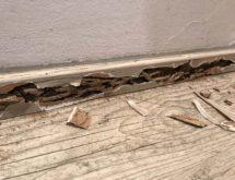 Υπόγειοι τερμίτες σε σοβατεπί
