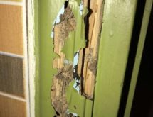 Προσβολή και χωμάτινοι αγωγοί τερμιτών