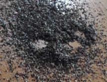 Δείγμα προσβολής ξυλοφάγων μυρμηγκιών στο ταβάνι