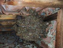 Φωλιά από σφήκες σε κεραμοσκεπή