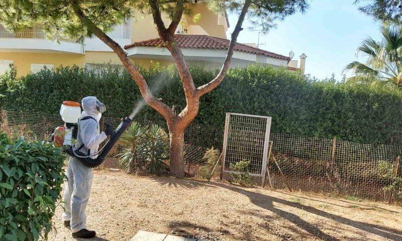 Καταπολέμηση κάμπιας των πεύκων