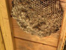 Φωλιά από σφήκες σε οροφή