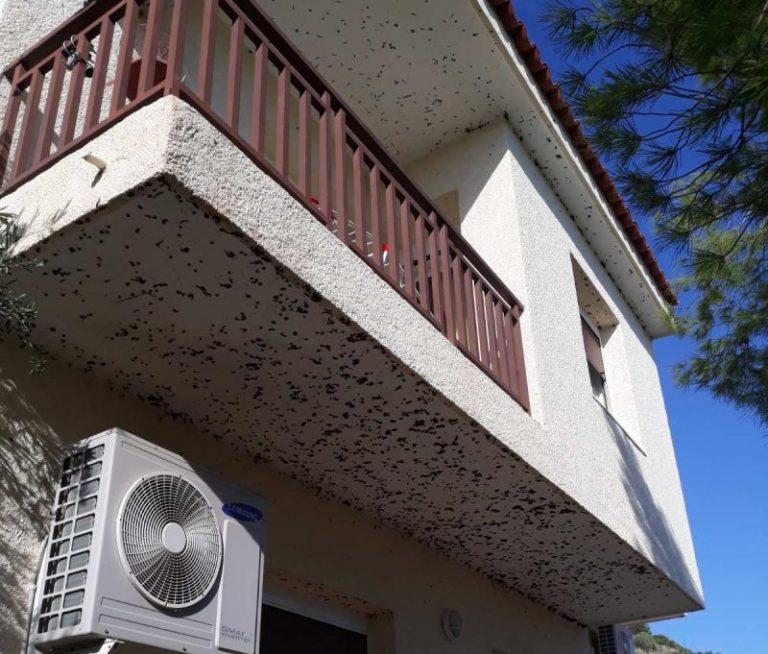 Μαύρα σκουλήκια υγρασίας σε εξωτερικούς τοίχους σπιτιού
