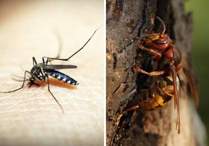 Πρόβλημα με κουνούπια και σφήκες
